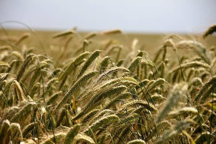Более 1600 сельхозпредприятий и крестьянско-фермерских хозяйств получили гуманитарную помощь от РФ