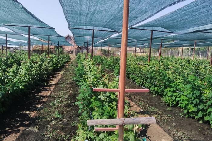 Аграрии подвели итоги проекта по внедрению новых технологий в выращивании ягодных культур
