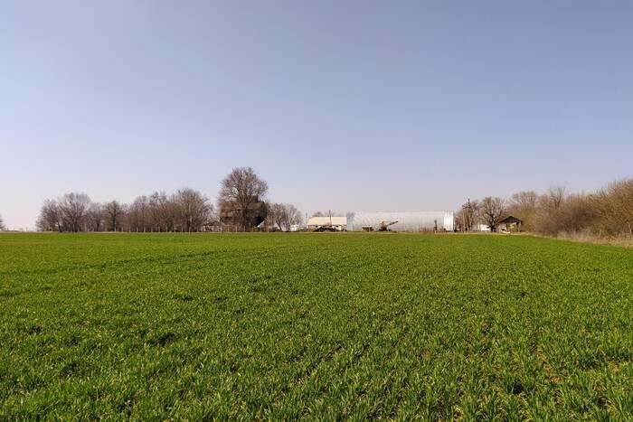 Дубоссарские аграрии рассчитывают получить хороший урожай озимой пшеницы и ячменя