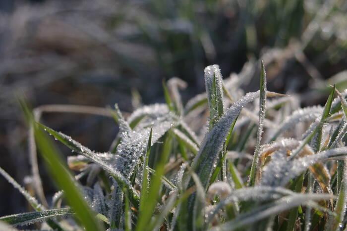 Метеорологи: Ночью 14 октября ожидаются заморозки на почве до -3°С