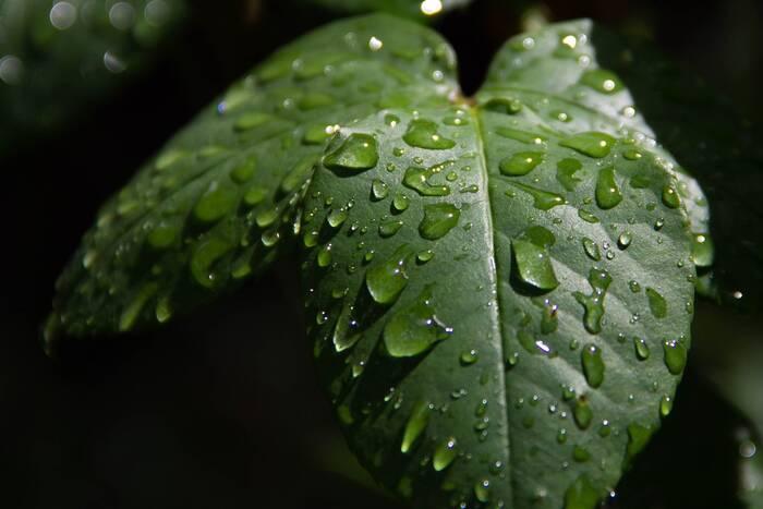 Метеорологи: В четверг возможна гроза