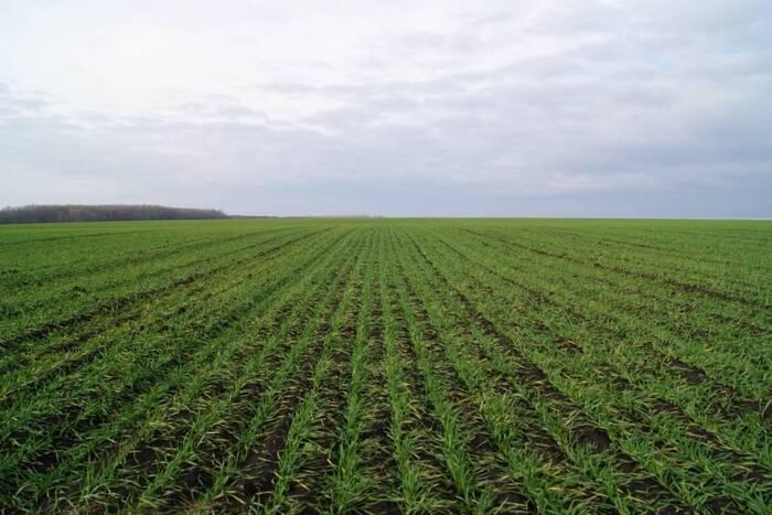Майские дожди могут улучшить прогноз урожая зерновых в северных районах Приднестровья
