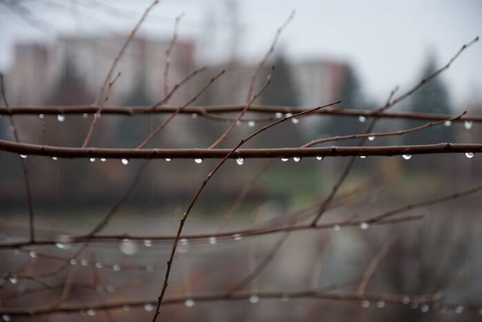 На среду синоптики прогнозируют кратковременный дождь