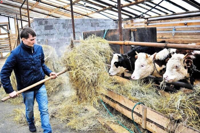 Фермерам продолжат оказывать поддержку для обеспечения продовольственной безопасности и импортозамещения