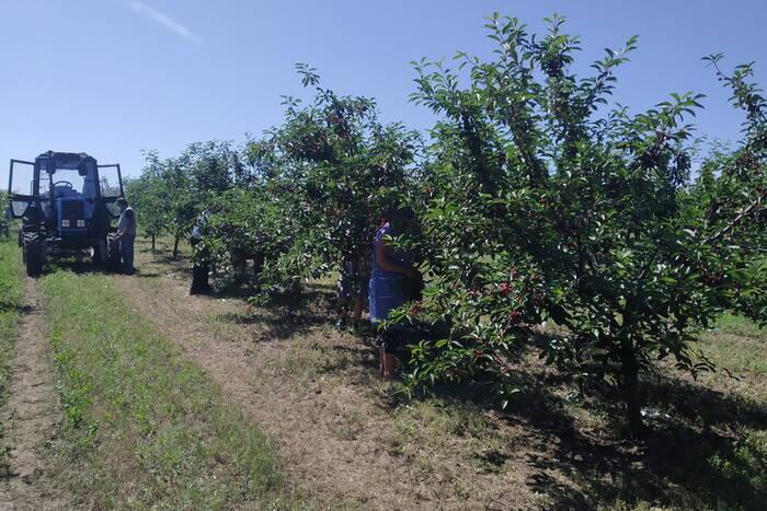 Приднестровские сельхозпроизводители начали получать господдержку