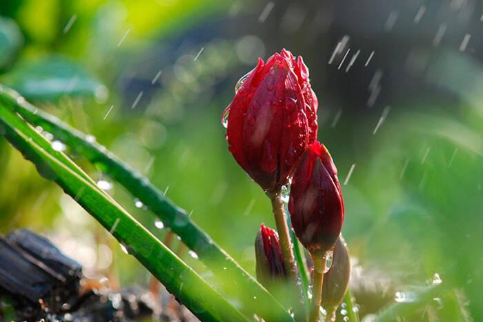 Прогноз погоды на 26 апреля: +13°С, местами дождь