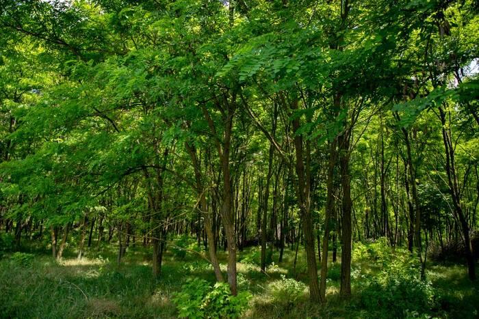 Работники леса и деревообрабатывающей промышленности отмечают профессиональный праздник