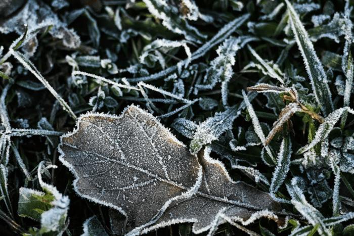 Синоптики предупреждают о ночных заморозках на почве