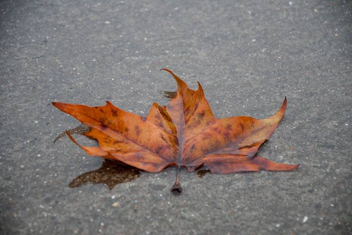Синоптики прогнозируют на вторник грозу