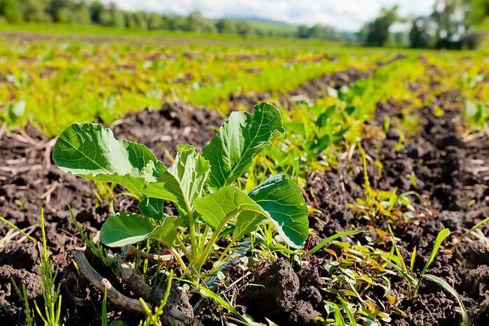 СПАПП предлагает разработать «дорожную карту» по развитию органического земледелия