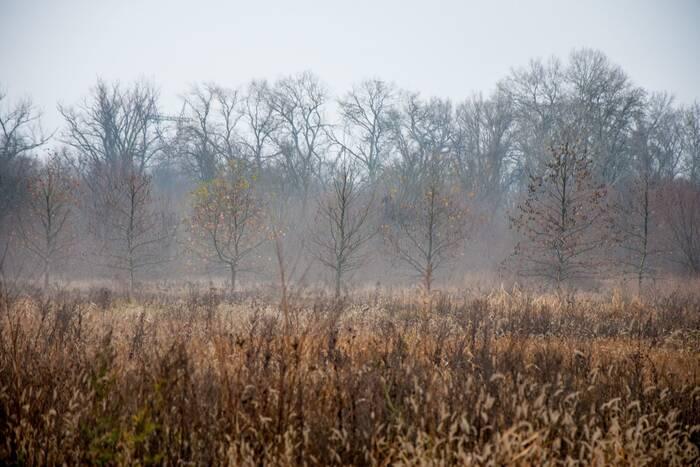 Туманное утро и облачный день ждут приднестровцев 6 января