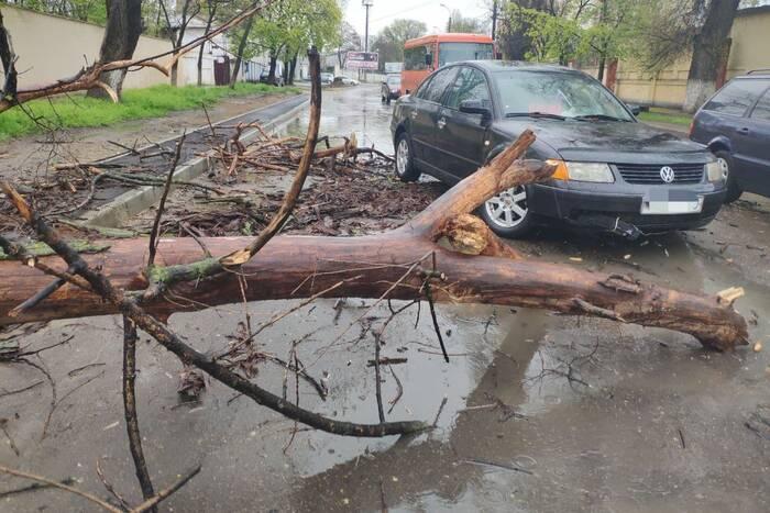 Упавшая ветка частично перекрыла движение на одной из столичных улиц