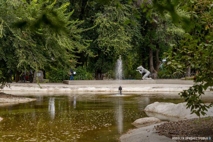 В Чобручском парке им. Дмитрия Родина после реконструкции снова появятся лебеди