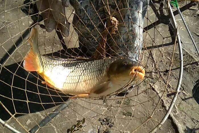 Ихтиологи: В низовьях Днестра участился незаконный вылов рыбы