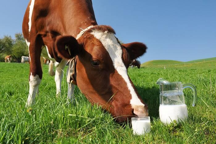 В первом полугодии фермеры сдали на промышленную переработку более 6 млн тонн молока