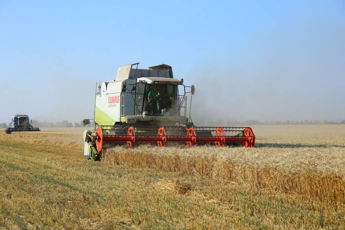 В республике началась уборка зерновых колосовых культур
