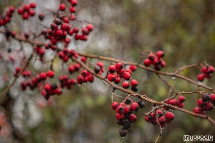 В субботу местами в республике пройдет дождь