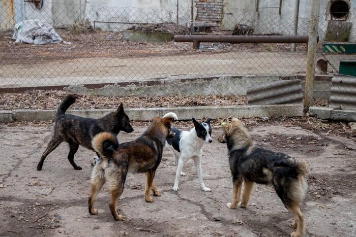 В Верховном Совете рассматривают проект госпрограммы регулирования численности безнадзорных животных