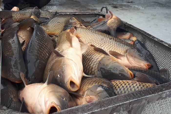Экологи объяснили необходимость запрета рыболовства на зимовальных ямах